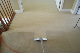 Showing the difference between the freshly cleaned carpet and the uncleaned part